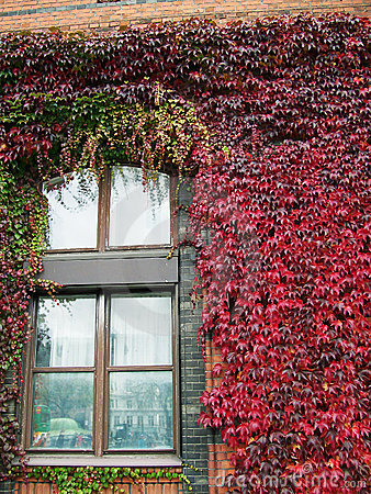 Free Ivy Covered Building 03 Royalty Free Stock Photography - 3416727