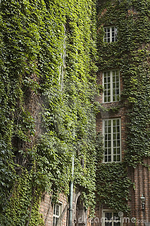 Free Ivy Covered Buildings Royalty Free Stock Images - 4146889