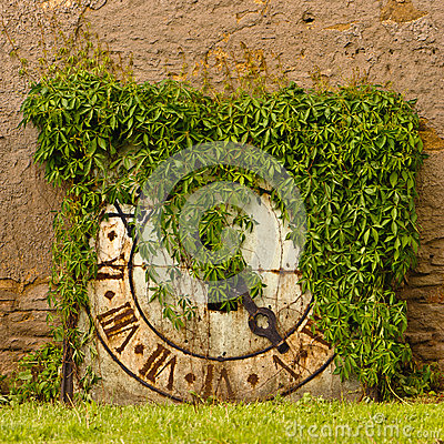Ivy covered clock