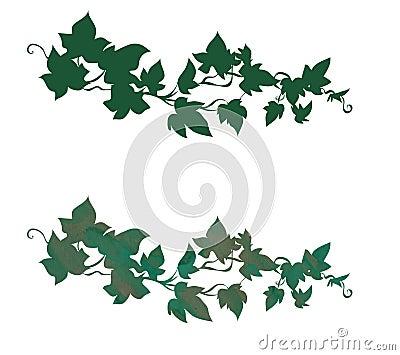 Ivy decoration