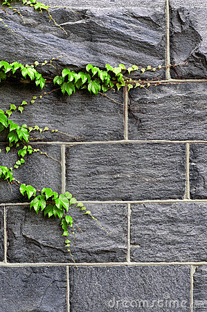 Free Ivy Growing On Wall Royalty Free Stock Images - 2594889