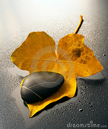 Free Ivy Leaf And Stone Royalty Free Stock Image - 14500376