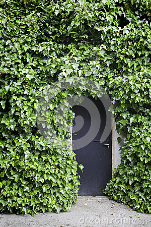 Free Ivy On The Wall And The Door Royalty Free Stock Photography - 30837267