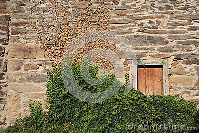 Ivy over stone wall