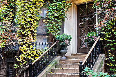 Ivy plants on old home