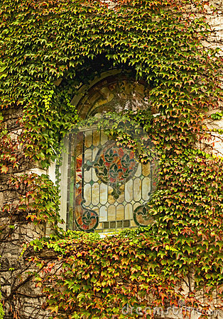 Ivy and stained glass window