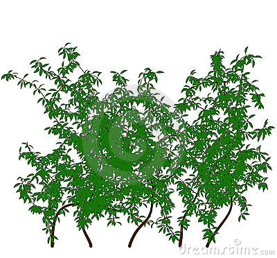 Ivy tree  outline silhouette