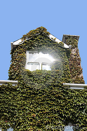 Ivy window glare