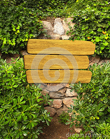 Ivy and wooden sign on ancient wall