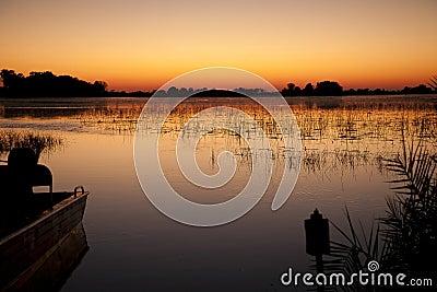 Jacana sunrise