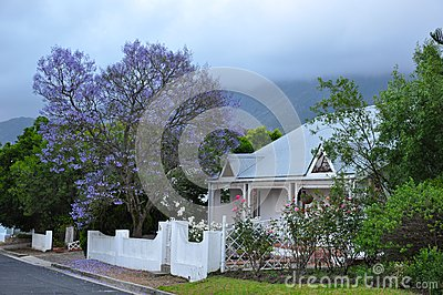 Jacaranda tree home Cape South Africa