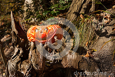 Jack o Lantern in a forest