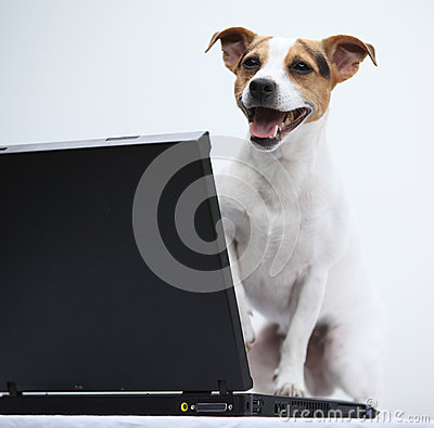 Jack russell terrier with notebook