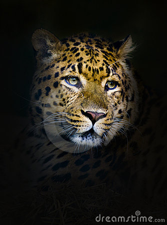 Jaguar Stock Photo - Image: 15264950