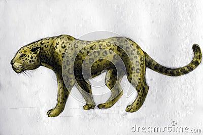 Jaguar - drawing
