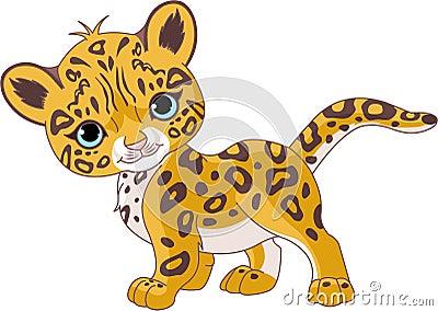 Jaguar lindo Cub