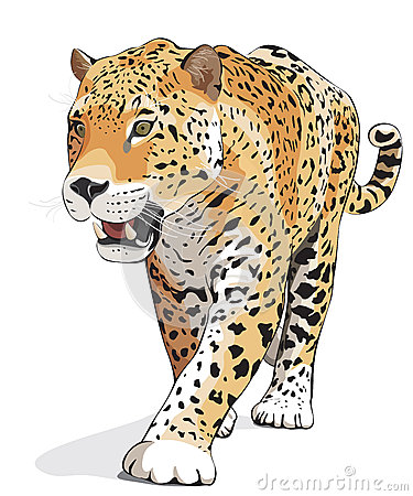 Jaguar - vector, isolated, shadow