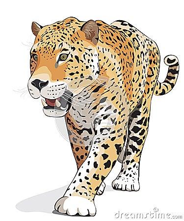 Jaguar - vetor, isolado, sombra