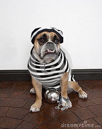 Jail Bird Bulldog