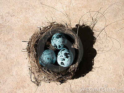 Jaja gniazdo