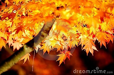 Japan Light up Autumn