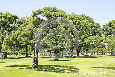 Japan s Imperial Palace lawn outside the Court