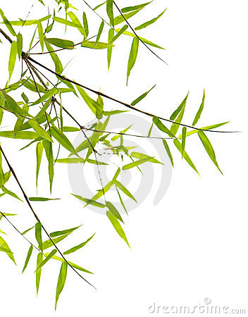 Japanese bamboo leaves