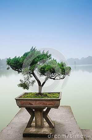 Free Japanese Bonsai Tree In Pot At Zen Garden Stock Image - 104511611