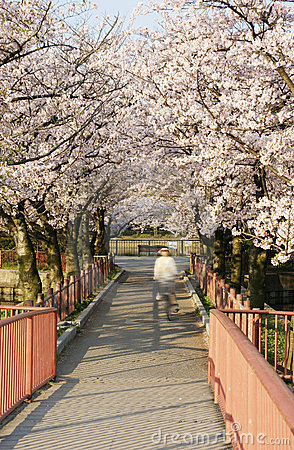 The Japanese cherry mall