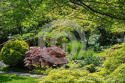 Beautiful manicured Japanese garden with mature Japanese Maple trees ...
