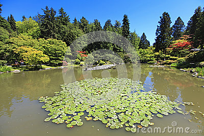 Japanese Garden in Seattle, WA. Pond with water lilies.