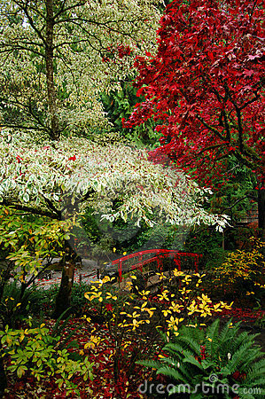 Free Japanese Gardens Stock Image - 2431321