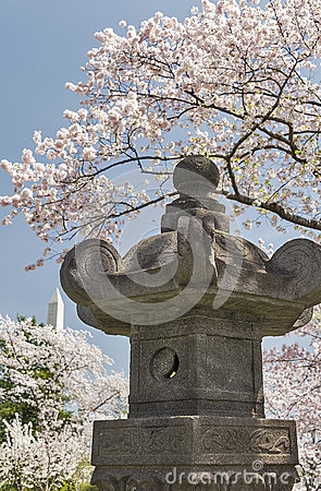 Free Japanese Lantern With Cherry Trees In Bloom Royalty Free Stock Photography - 38987557