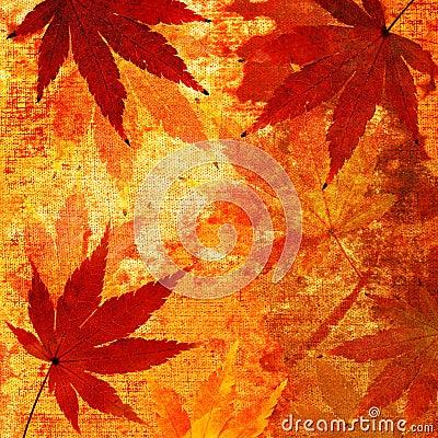 Japanese maple autumn background