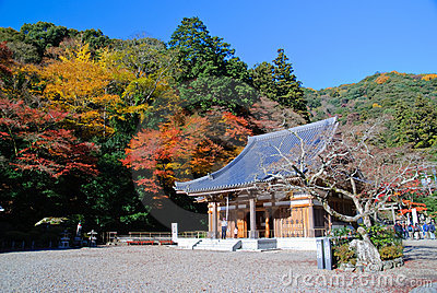 Japanese maples with a temple.