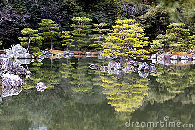 Japanese pruned pine trees reflection