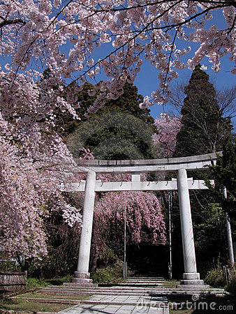 Japanese spring view