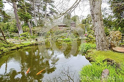 Japanese tea garden san francisco stock photo image for Koi pond japanese tea garden san francisco