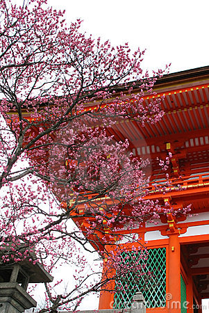 Japanese Temple Blossom
