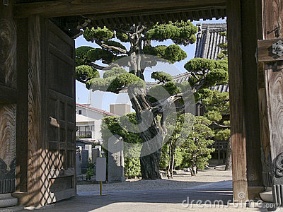 Japanese temple gate with big tree