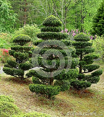 Japanische Bäume
