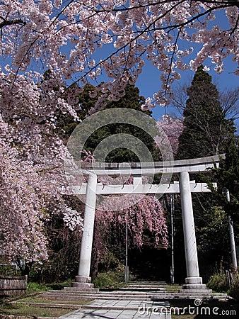 Japanische Frühlingsansicht