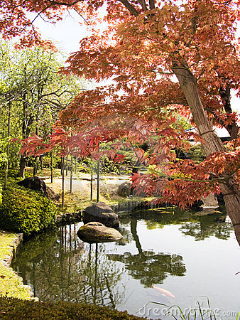 Japanse tuin met esdoornboom