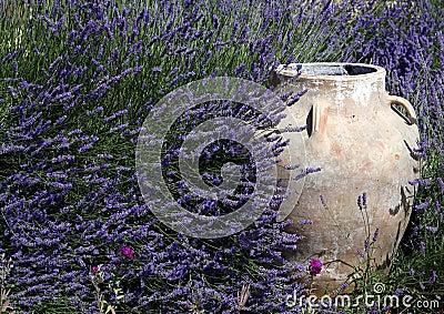 Jar amidst Lavender