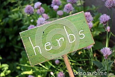 Jardín de hierba