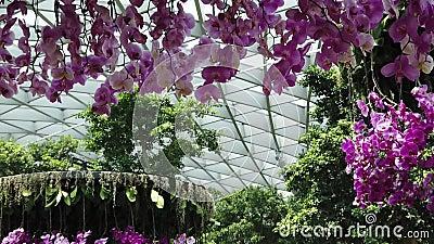 Jardín florido del aeropuerto de Jewel metrajes