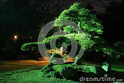 Jardim do zen em a noite