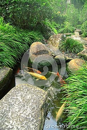 Jardim e lagoa japoneses de Koi