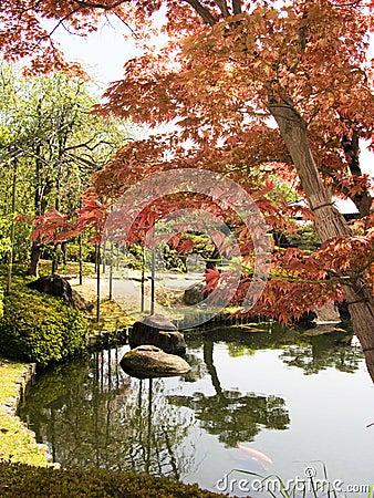 Jardim japonês com árvore de bordo