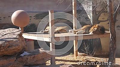 Jardim zoológico Albuquerque New mexico vídeos de arquivo
